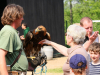 Birds of prey show in Gymnich